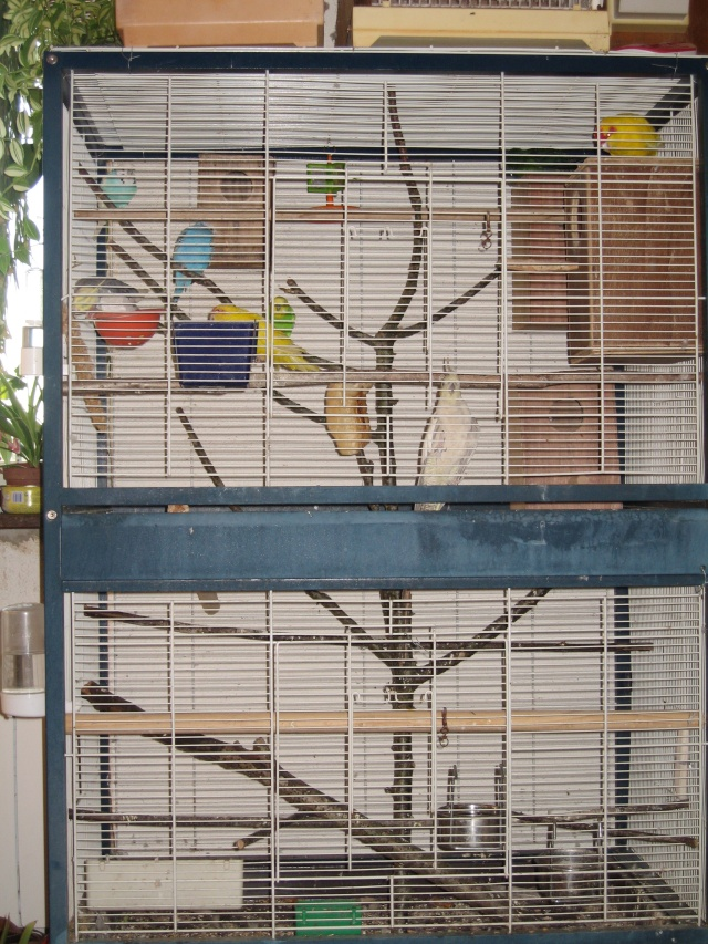 mes oiseaux exotique  - Page 3 Img_0936