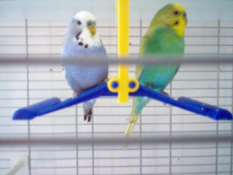 nouvelle cage Photo_10