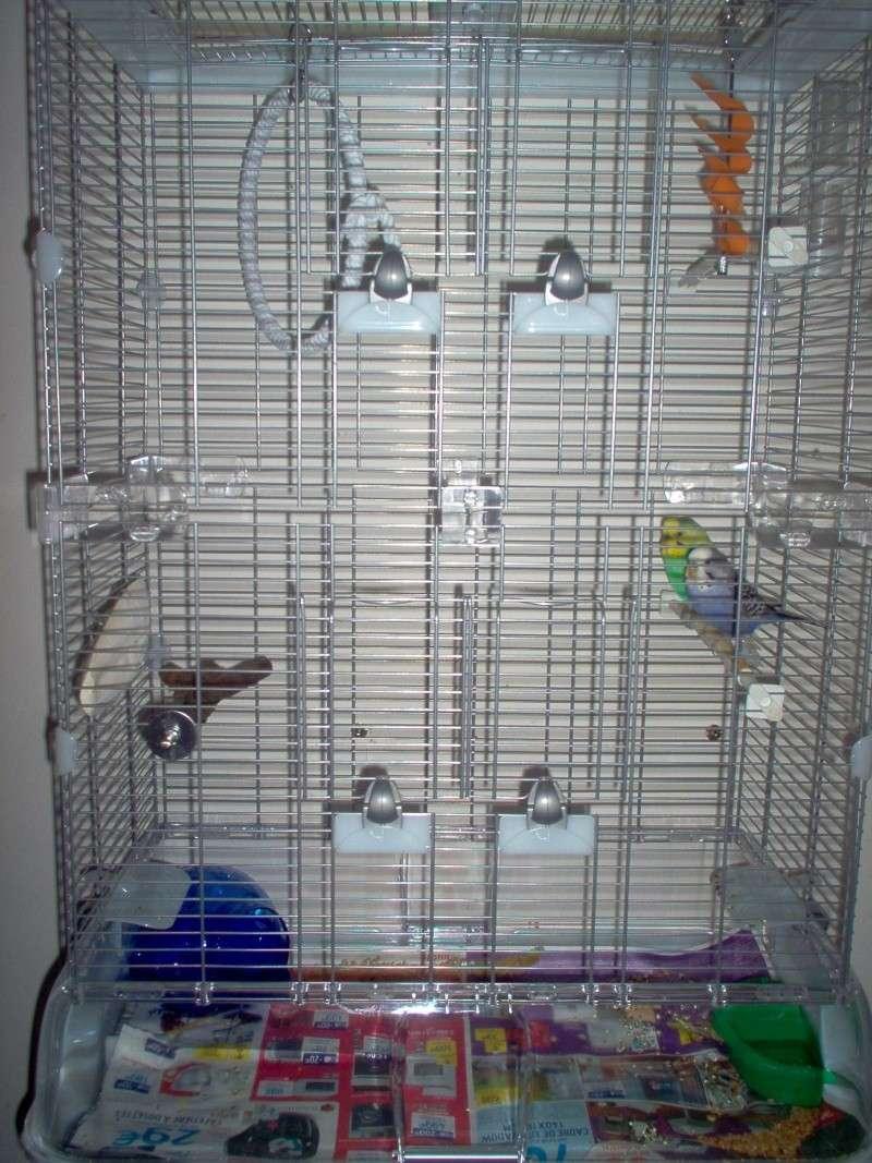 nouvelle cage Photo_11