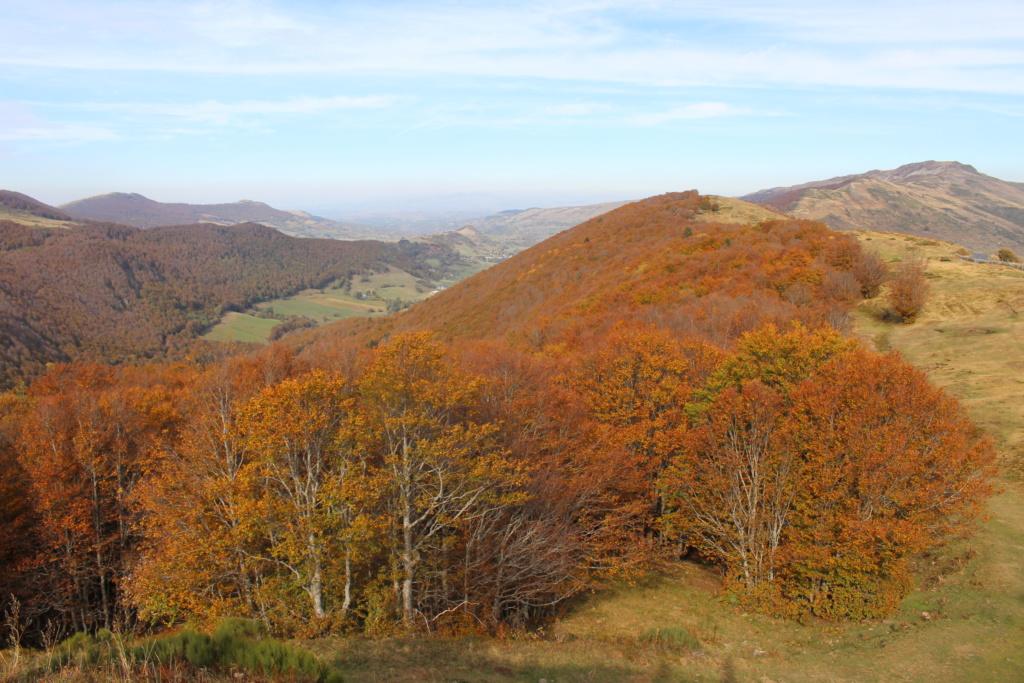 L'automne sur le massif cantalien Img_9915