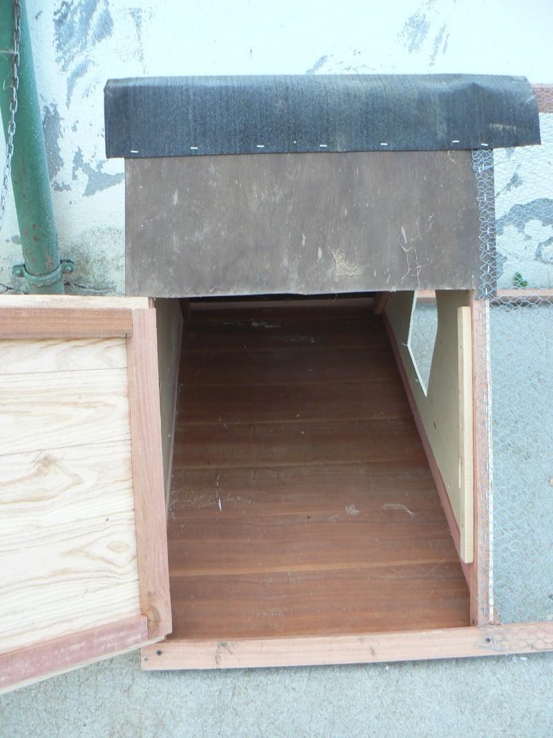 poussins - cabane poule et ses poussins  P1170520