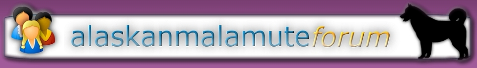 Alaskan Malamute Forum