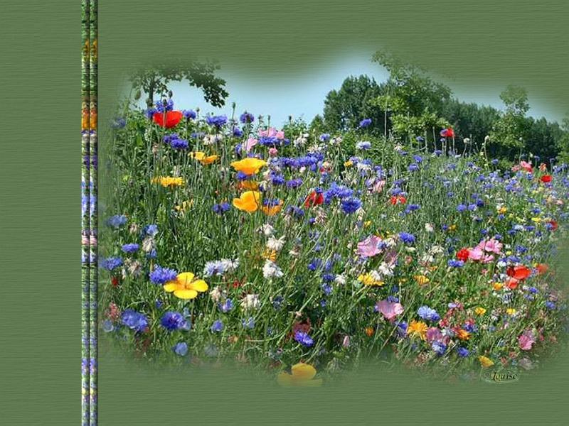 LES MERVEILLES DE LA NATURE Fleurs10