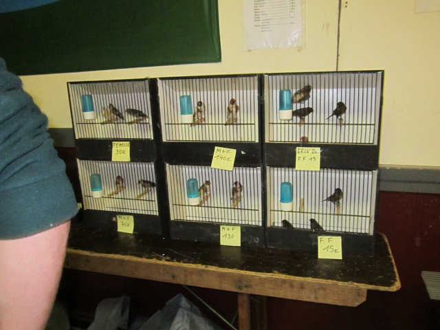 bourses d'oiseaux a flemalle Trixhe26