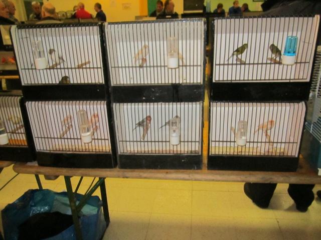bourses d'oiseaux a flemalle Trixhe27