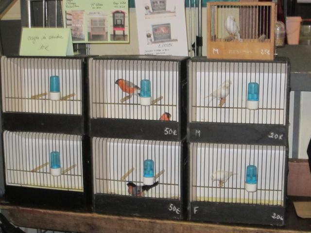 bourses d'oiseaux a flemalle Trixhe32