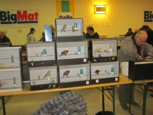 bourses d'oiseaux a flemalle Trixhe33