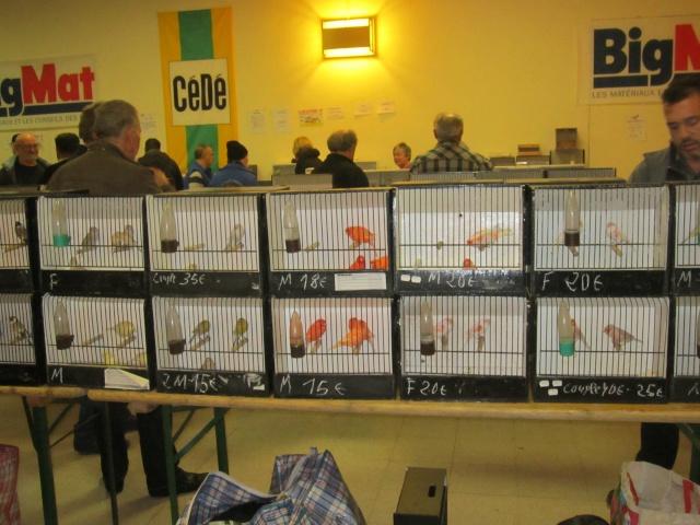 bourses d'oiseaux a flemalle Trixhe34