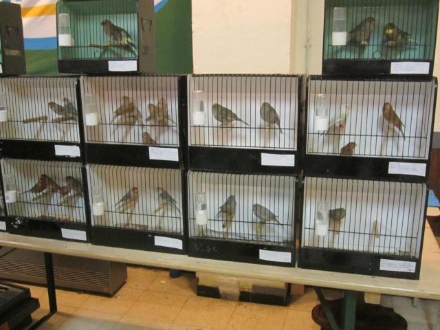 bourses d'oiseaux a flemalle Trixhe35