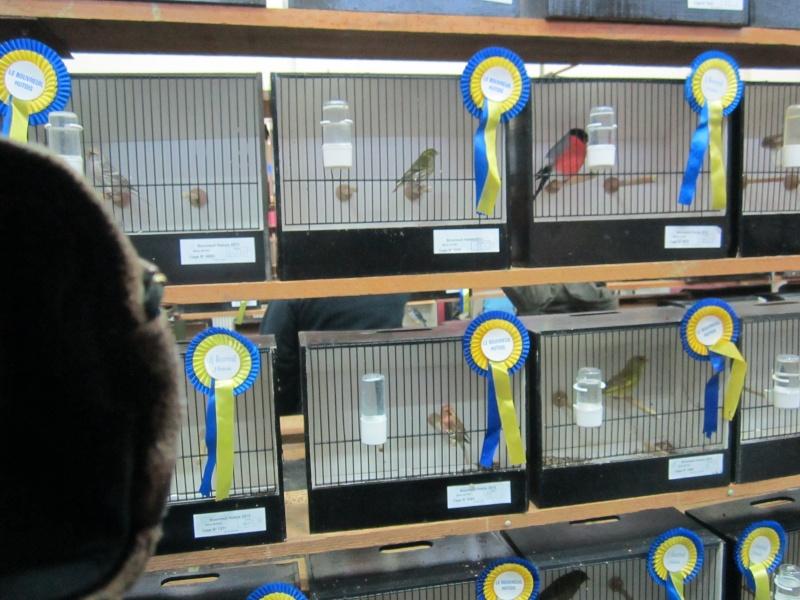 bourses d'oiseaux a flemalle Trixhe42