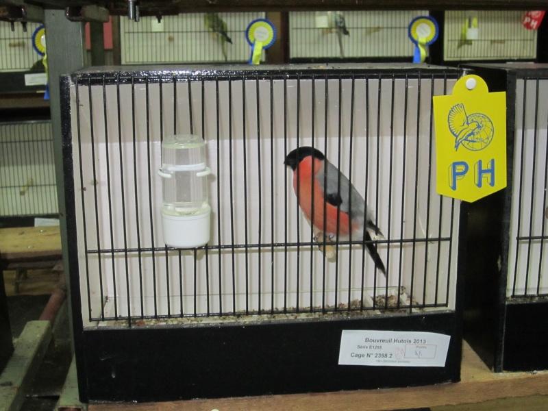 bourses d'oiseaux a flemalle Trixhe43