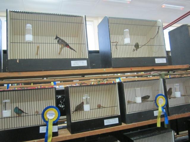bourses d'oiseaux a flemalle Trixhe45