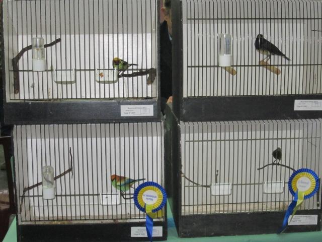 bourses d'oiseaux a flemalle Trixhe46