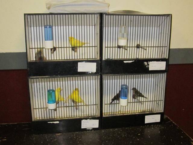 bourses d'oiseaux a flemalle Trixhe47