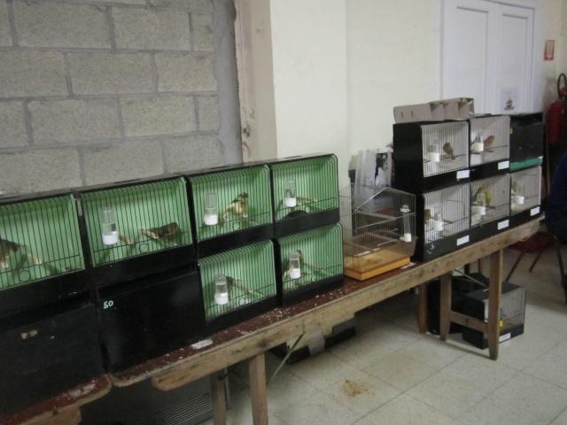 bourses d'oiseaux a flemalle Trixhe48