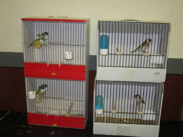 bourses d'oiseaux a flemalle Trixhe50