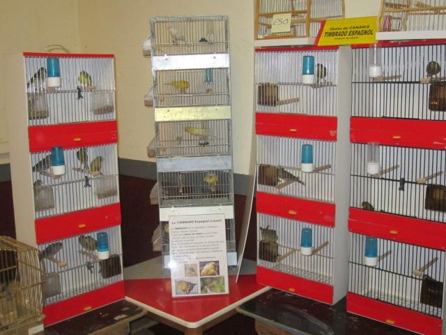 bourses d'oiseaux a flemalle Trixhe51