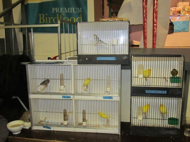 bourses d'oiseaux a flemalle Trixhe53