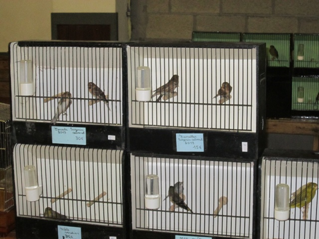 bourses d'oiseaux a flemalle Trixhe55
