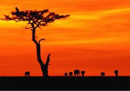 LC L'Afrique par tous ses pays Afriqu11