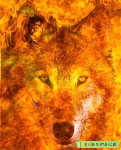 Créatures fantastiques au grès de la toile 2013-2014 Loup_011