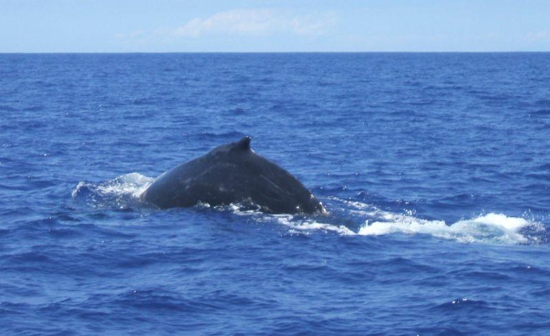 Csendes-óceán 0172