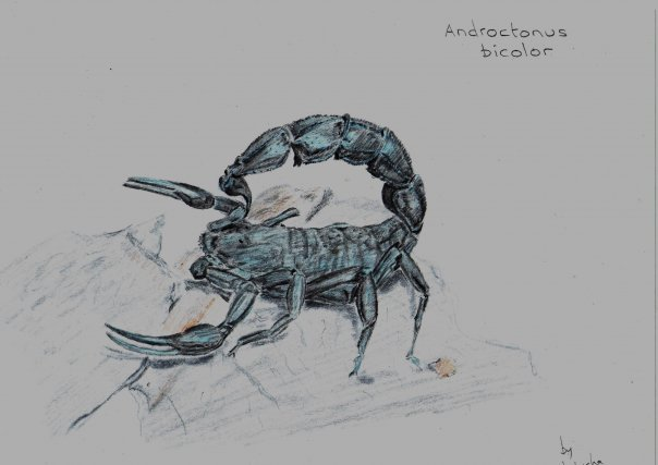 ScorpionForum Art Contest II A_bico10