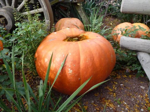 Séjour Halloween du 25 au 27 octobre - Hotel New York - Page 4 64310