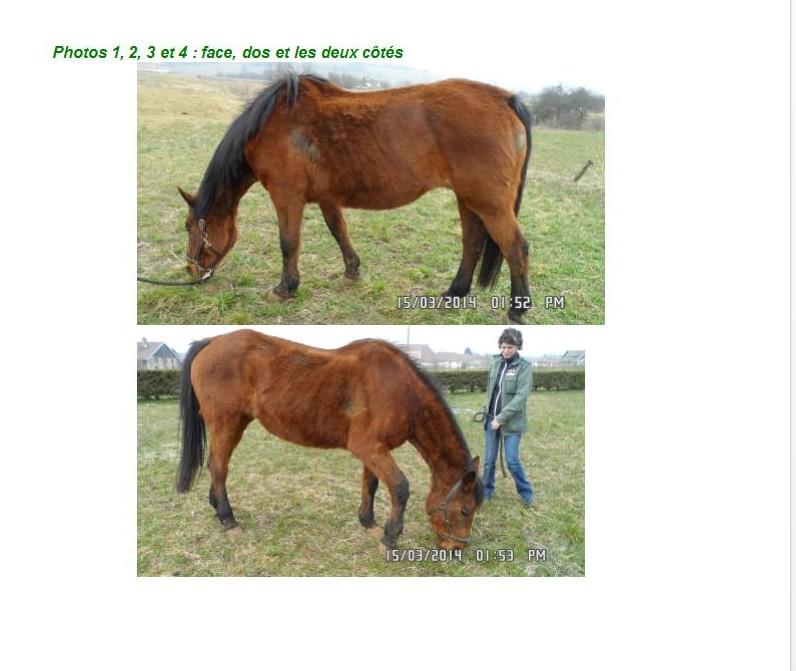 UKOSI - SF née en 1986 - adoptée en mars 2013 par Pepper - Page 3 Cr_vis37