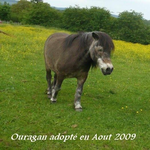 OURAGAN - Poney Shetland né en 1991 - adopté en juillet 2009 par malik70 Ouraga10