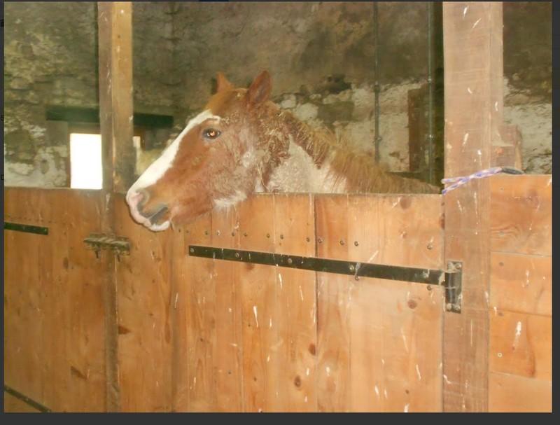 WALANIE (VANILLE) - ONC poney - adoptée en avril 2011 par voulk  - Page 6 Visite70