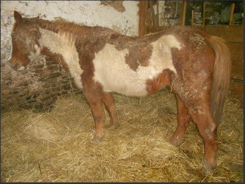 WALANIE (VANILLE) - ONC poney - adoptée en avril 2011 par voulk  - Page 6 Visite72