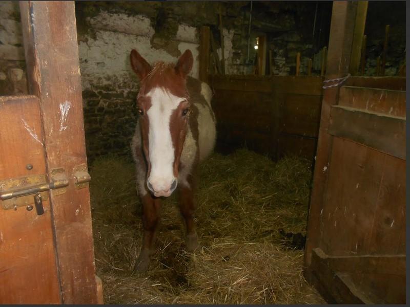 WALANIE (VANILLE) - ONC poney - adoptée en avril 2011 par voulk  - Page 6 Visite73