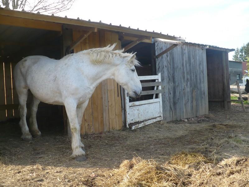 HIRONDELLE - Trait Percheron née en 1995 - Adoptée en octobre 2010 - Page 2 Visite85