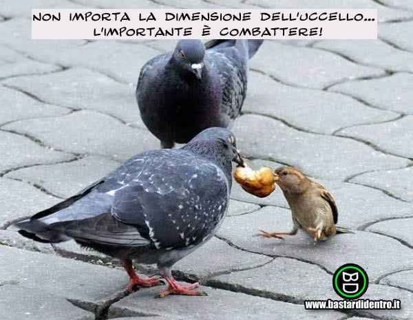 Desiderio avverato Bd121510