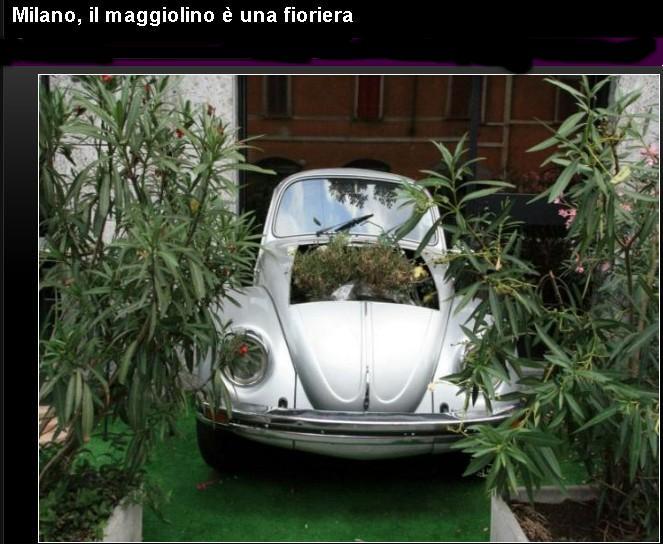 Il Maggiolino Maggio10