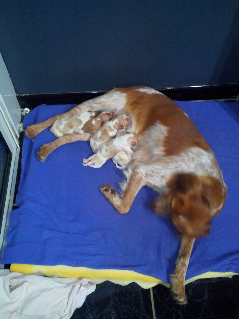 ma chienne a mis bas Img_2011