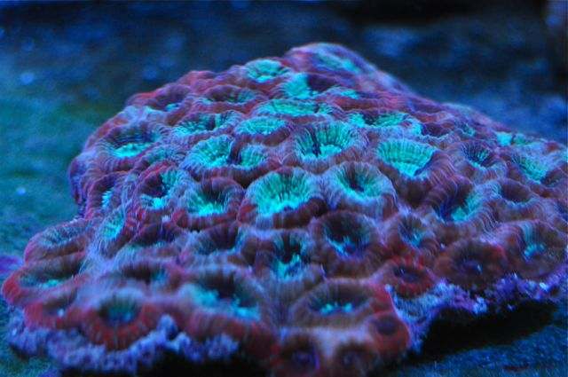 le reef tank d'harold - Page 40 311