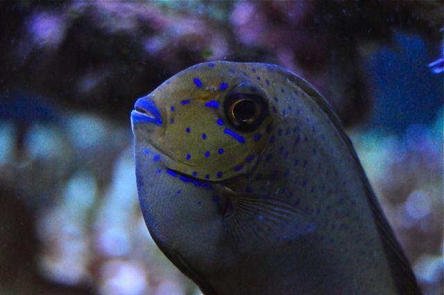 le reef tank d'harold A22
