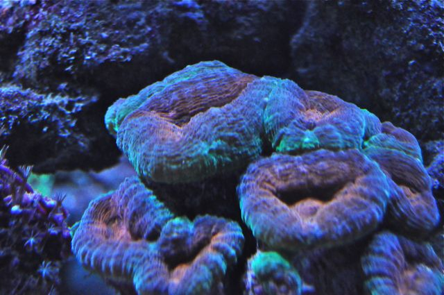 le reef tank d'harold - Page 40 Aa10