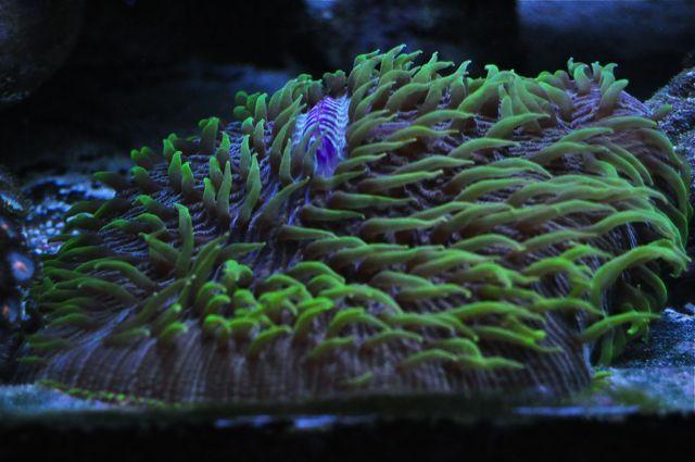 le reef tank d'harold - Page 40 Aaa13