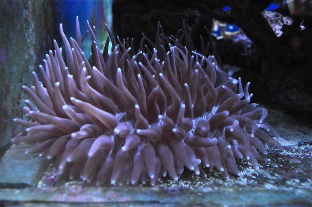 le reef tank d'harold Dsc_0018