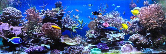 le reef tank d'harold - Page 4 Dsc_0033