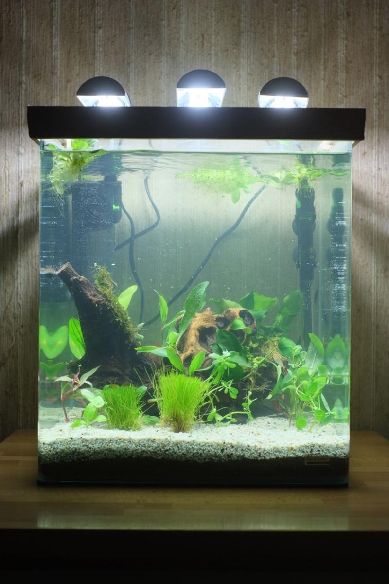 Mon Retour à l'aquariophile, Nano 60L méthode Walstad Aqua-012