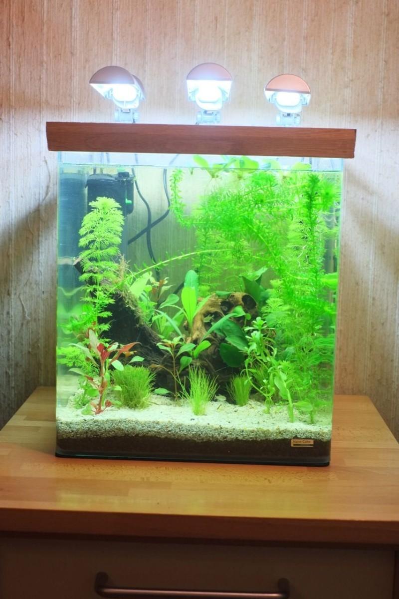 Mon Retour à l'aquariophile, Nano 60L méthode Walstad Aqua-110