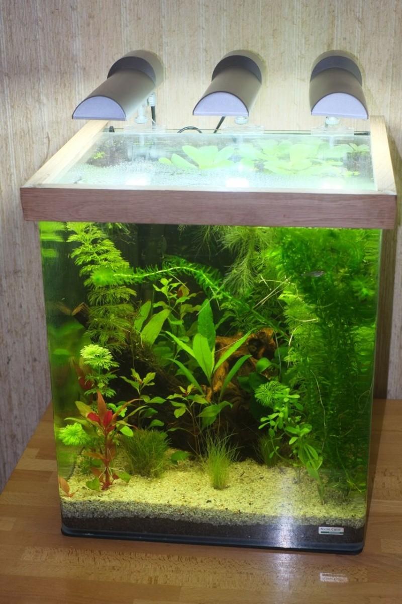 Mon Retour à l'aquariophile, Nano 60L méthode Walstad - Page 2 Aqua-210