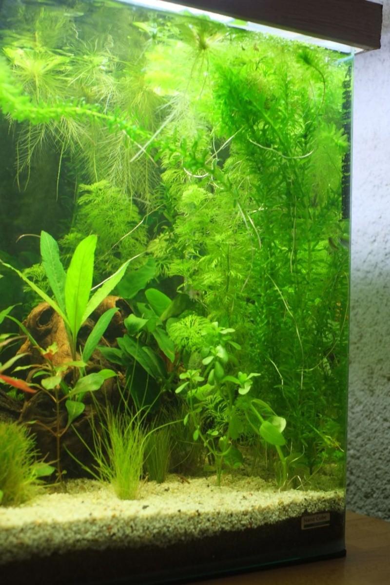 Mon Retour à l'aquariophile, Nano 60L méthode Walstad - Page 2 Aqua-212