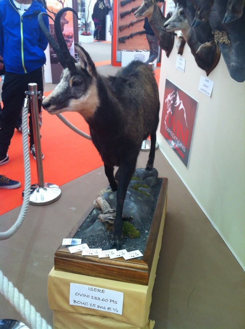 chamois record dans l isere - Page 2 Image22
