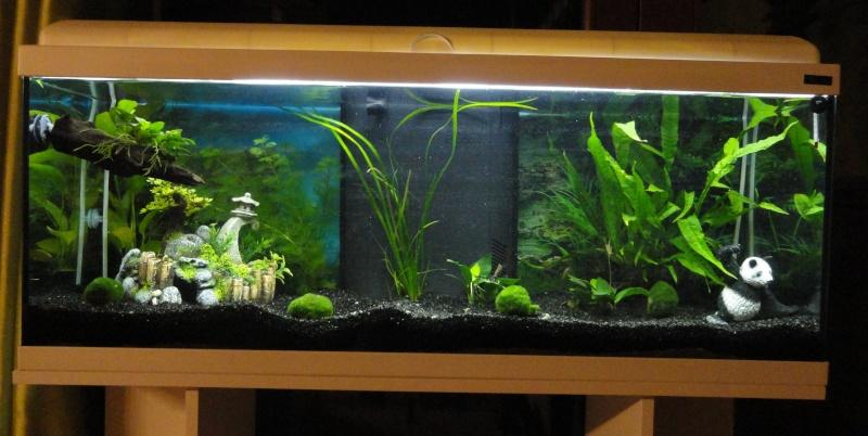 Mon premier aquarium, encore inhabité Dsc08810