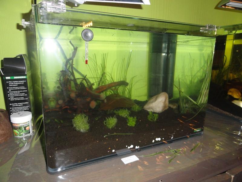 Présentation de mes aquas Dsc09211